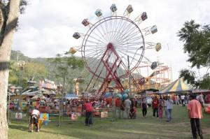 Uso de animais em parques de diversão: ser contra ou a favor?