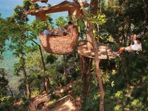 restaurantQue tal um restaurante em um ninho de árvore?