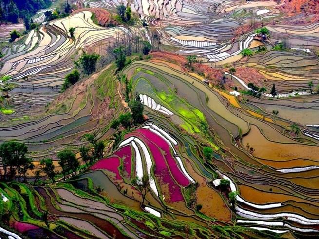 Terraços de arroz, província de Yunnan, sudoeste da China