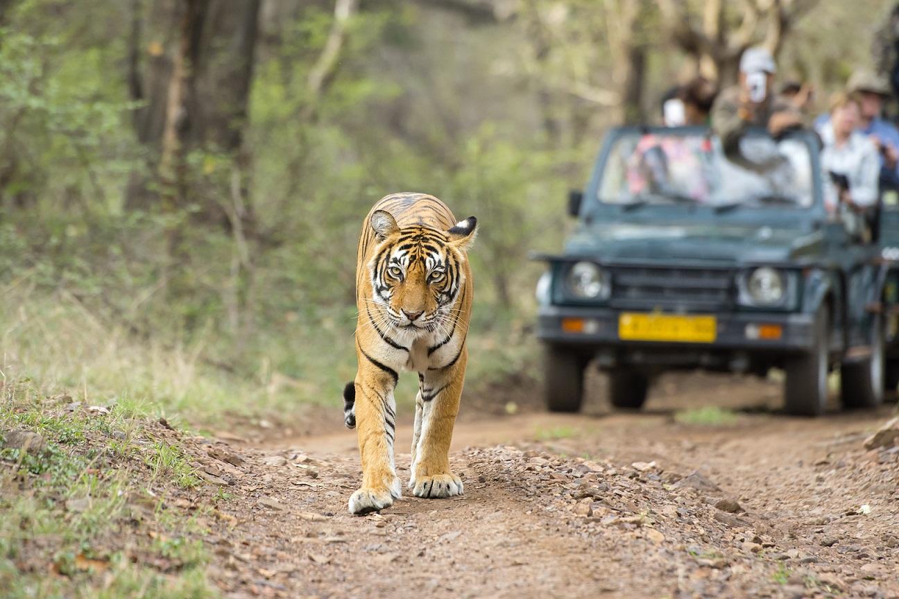 Parque Nacional de Ranthambore