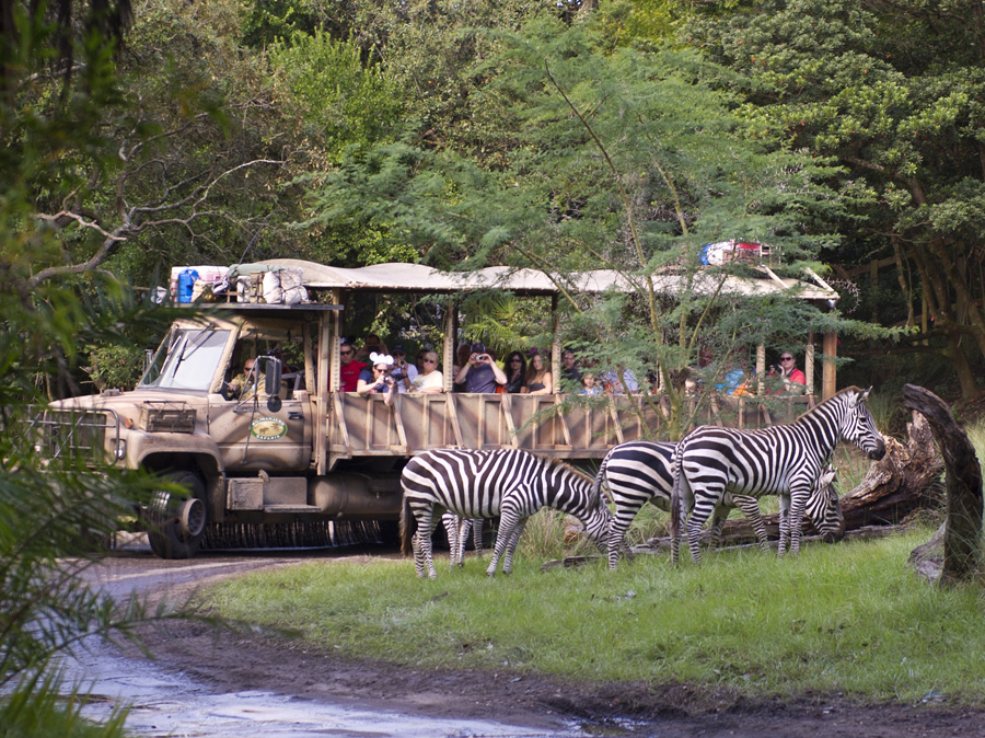 Kilimanjaro Safari – Animal Kingdom