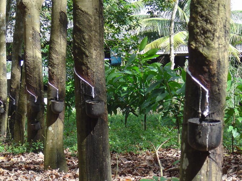 Desconectado na Amazônia: faça um tour e descubra seus encantos